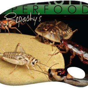 REPASHY BUG BURGER (170GR)
