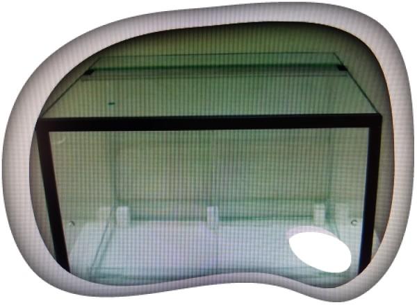 Terrario dendrobates 40x40x50