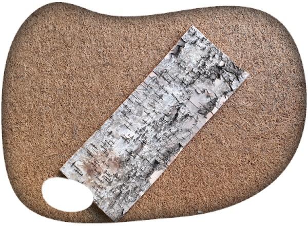Plancha corteza abedul 30x12cm