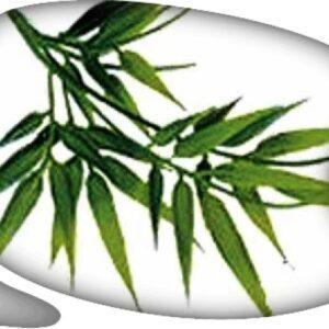 """Planta Madagascar Bambu """"S"""" 30cm"""