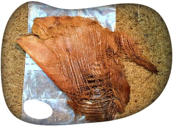 Corteza palmera